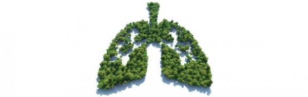 Banner_Luftverschmutzung