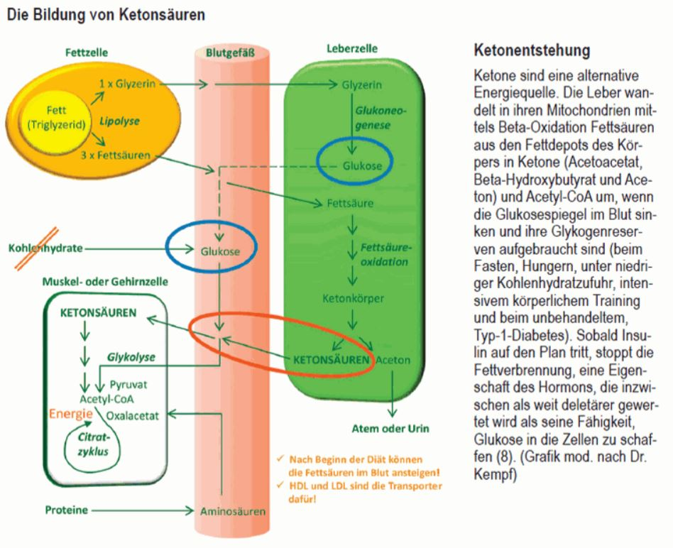 Bildung_Ketonsaure